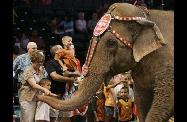 Empresarios de circo evalúan sacrificar animales