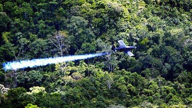 Colombia suspende uso del polémico pesticida glifosato contra cultivos de coca
