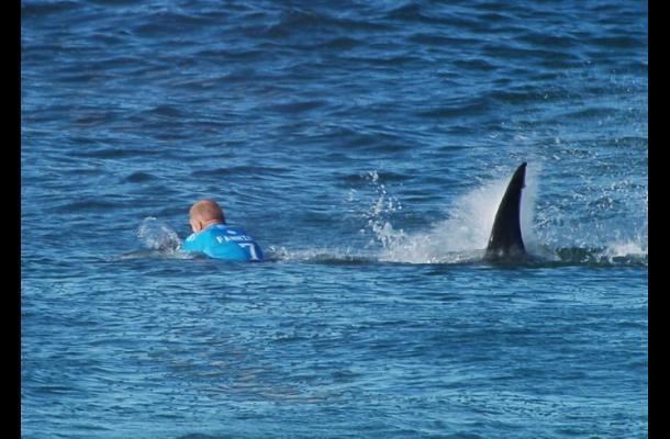 Surfista australiano sobrevive al ataque de un tiburón