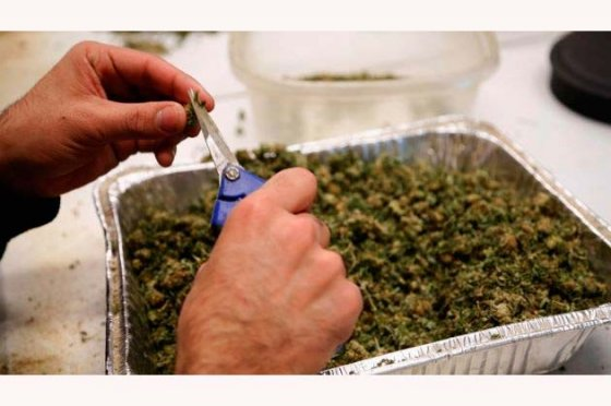 Críticas por venta de marihuana en farmacias de Uruguay