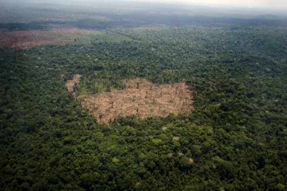 Deforestación amenaza la mitad de especies en la Amazonía
