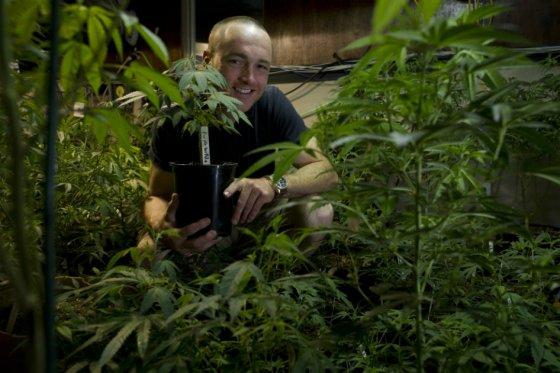 Suprema Corte de México autoriza uso recreativo de marihuana a 4 activistas