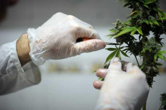 Proliferación de puntos de venta de marihuana, un gran problema en Toronto