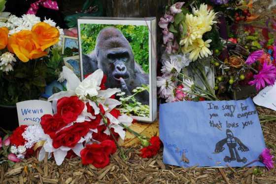 Madre de niño que cayó a foso de gorila en un zoológico no enfrentará cargos penales