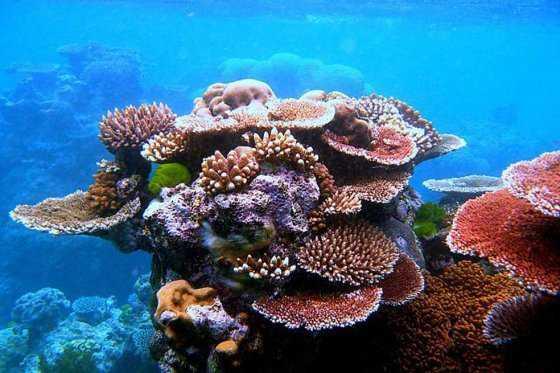EE.UU. y Cuba se reunirán para mejorar protección de áreas marinas