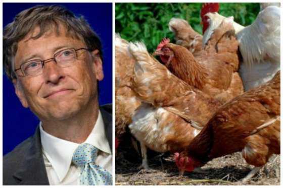 Gobierno boliviano indignado con propuesta de Bill Gates de donar gallinas