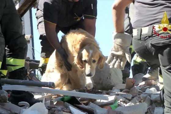 La increíble historia de Romeo, el perro que se convirtió en el último sobreviviente del sismo en Italia
