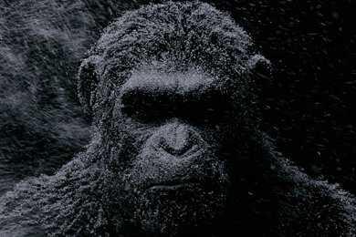 La guerra comienza en el «Planeta de los simios»