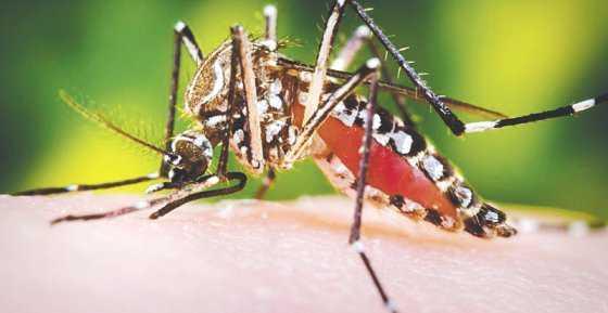 Alarma en Bolivia por 13 casos de microcefalia producidos por zika