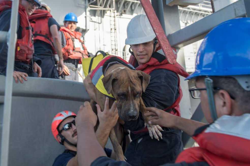 Tras cinco meses perdidas en altamar con sus perros, dos mujeres fueron rescatadas