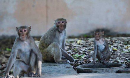 Los animales se apropian de las calles de la India en plena cuarentena por el coronavirus