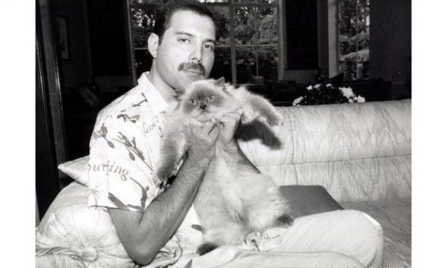 """Documentales sobre Freddie Mercury y """"A Night at the Opera"""" de Queen, este viernes en TV"""