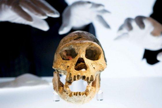Primer asesinato demostrado de la historia tiene 430.000 años