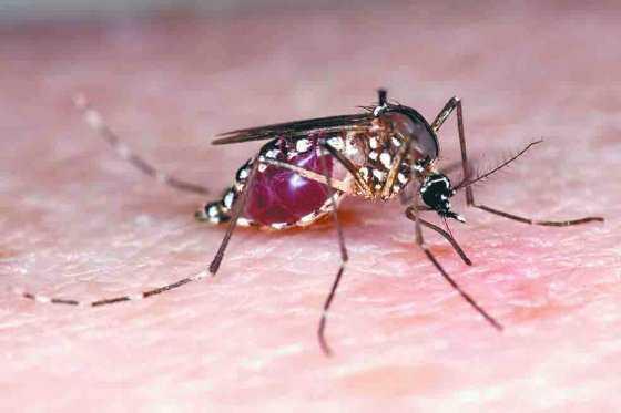 Confirman la presencia del virus del Zika en Haití