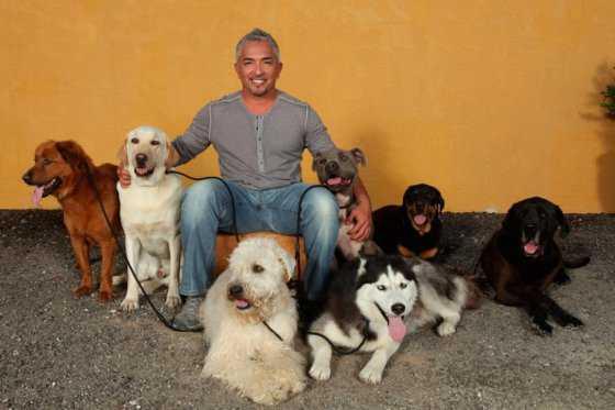 Por crueldad animal investigan en EE.UU. a César Millán, 'el encantador de perros'