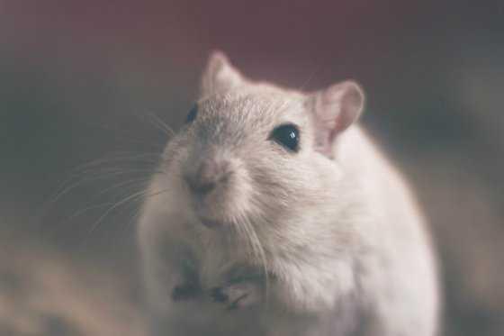 Un avión de Air France no pudo despegar por culpa de un ratón