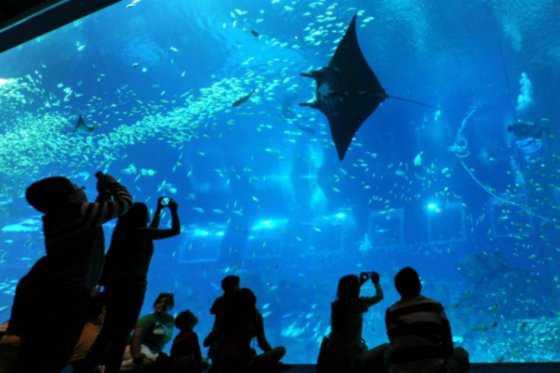 Inauguran en Río de Janeiro el acuario más grande de América Latina