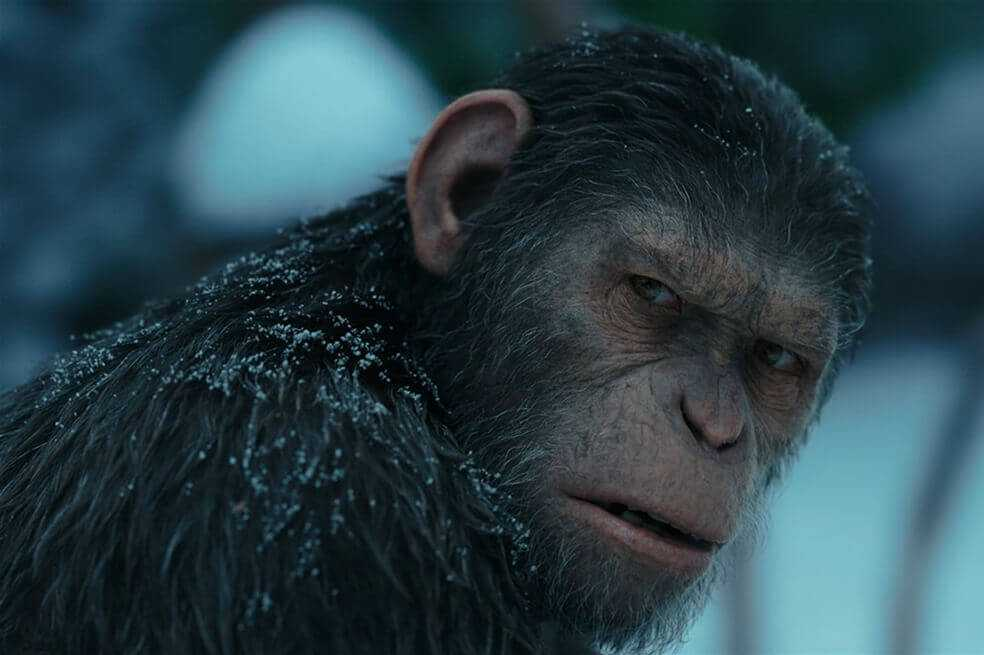 Disney trabaja en una nueva película de «El planeta de los simios»